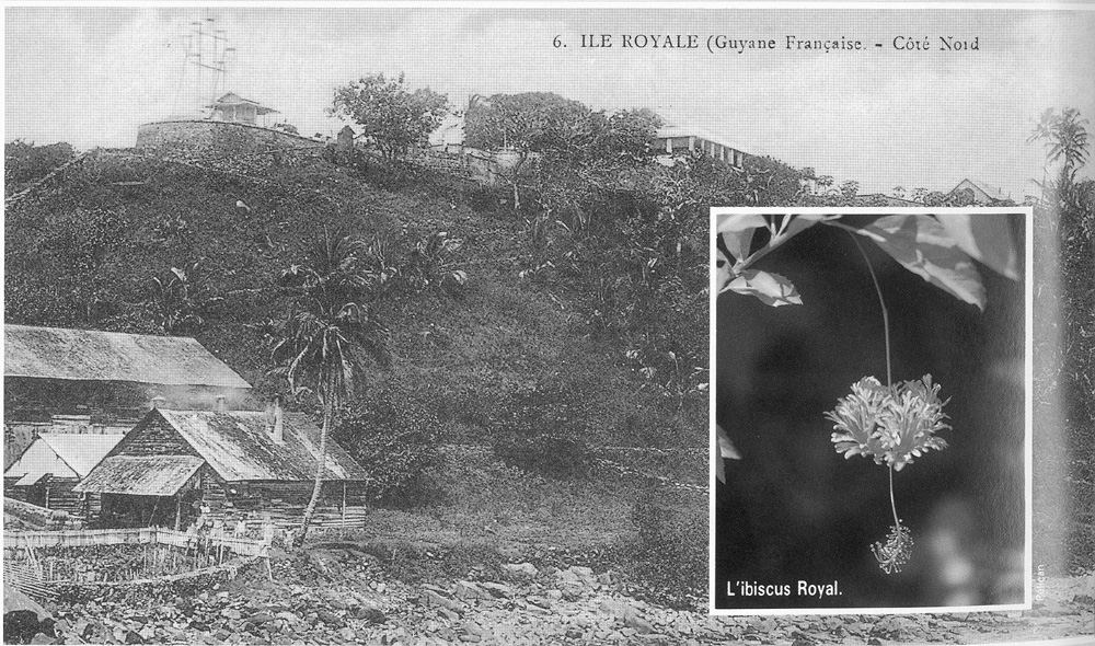 [Campagnes] Guyane - Page 10 Ile_ro11