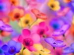 Floralie2301