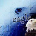eagle4176