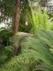 Jardin Botanique National de Belgique Evo11110