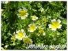 Zones USDA 1 à 8 Limnan10