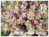 Zones USDA 1 à 8 Lysima10