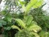 Jardin Botanique National de Belgique Mab510