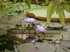 Jardin Botanique National de Belgique Vic1410