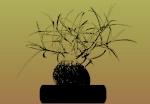 Cactacées, caudiciformes et autres xérophytes 1270-1