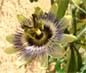 Orchidées, broméliacées et carnivores 229-51