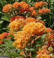 Autres plantes 301-43