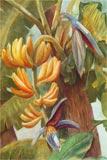 Cactacées, caudiciformes et autres xérophytes 38-79