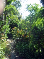 Cactacées, caudiciformes et autres xérophytes 666-67