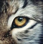 Fire's Shadow ~ Lynx Eye