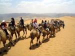 البدوي