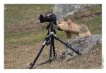 Marmottographe