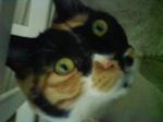 catniki