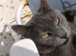 TITIKA CAT