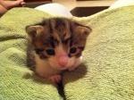 kittenb