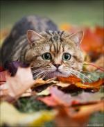 catsforever
