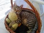 o_mauros_gatos