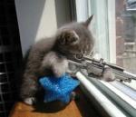 sniper_kitten