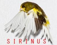 sirinus