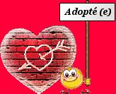 ANIS - x beagle 11 ans - Refuge des Clochards Poilus à Tabanac (33) 460134
