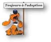 RAFIKI - x setter 10 ans  (8  ans de refuge) - Refuge Clochards Poilus à Tabanac (33) 771574
