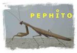 PEPHITO