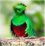quetzal97