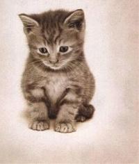 Cat Avery