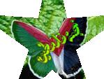 نجمة فلسطين*
