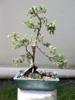 Les plantes d'intérieur et d'extérieur, en pot 75-36