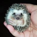 Snufflehogs