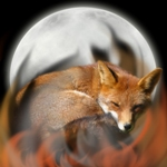 Night_Fox