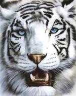 Tigrusydragon