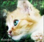 Shinekit