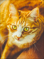Foxflare