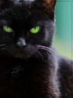 Panthereye