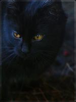 Ravenpaw,