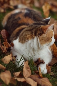 Grasseye