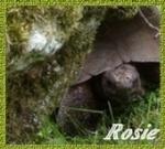 rosie22