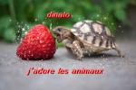 dinato