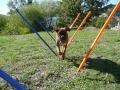 Hisis-my-dog