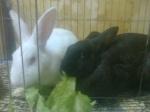 ariel y mi conejo rabito