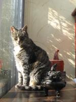 Jazzcat