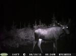 buck 47