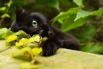 Schwarzblüte