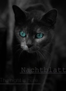 Nachtblatt