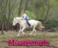 Misseponyta