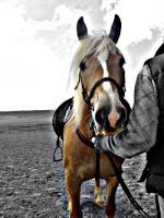 kikka.horse