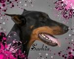 Sarhia