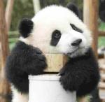 panda69